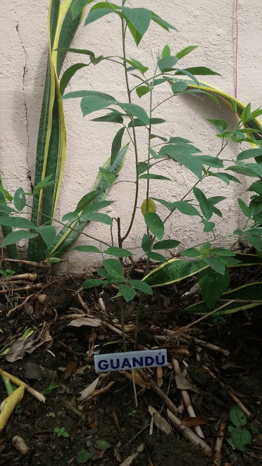 Urban Gardening Article 9