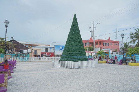 Christmas Tree Belize