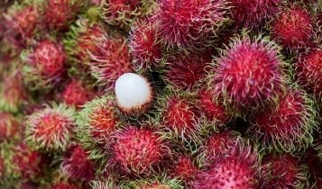 close up picture of a lychee