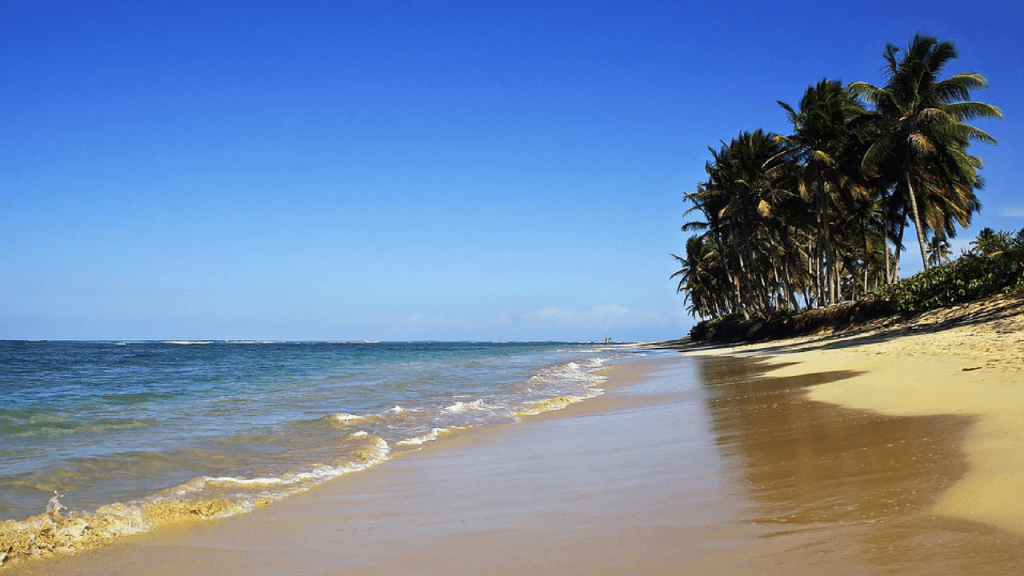 Bavaro Beach Punta Cana. Golden sand with some palm trees and gentle seas
