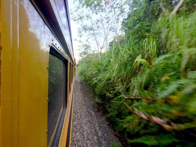 view from the side of a panama canal train. lush jungle scenery borders the railway track