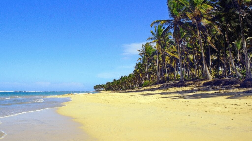 palm lined beach punta cana dominican republic. blue sea and a clear sky