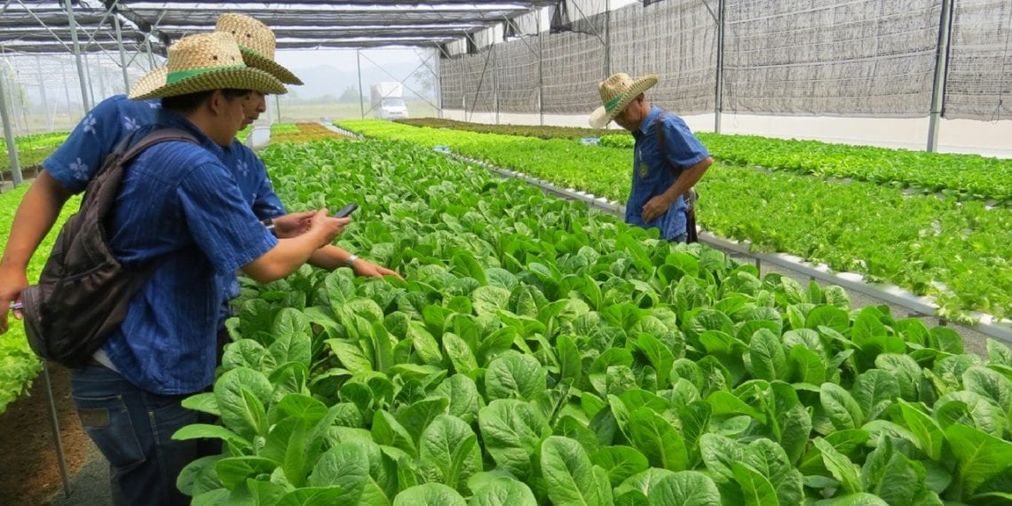 Thailand Aquaponics Project Outperforming Projected Returns