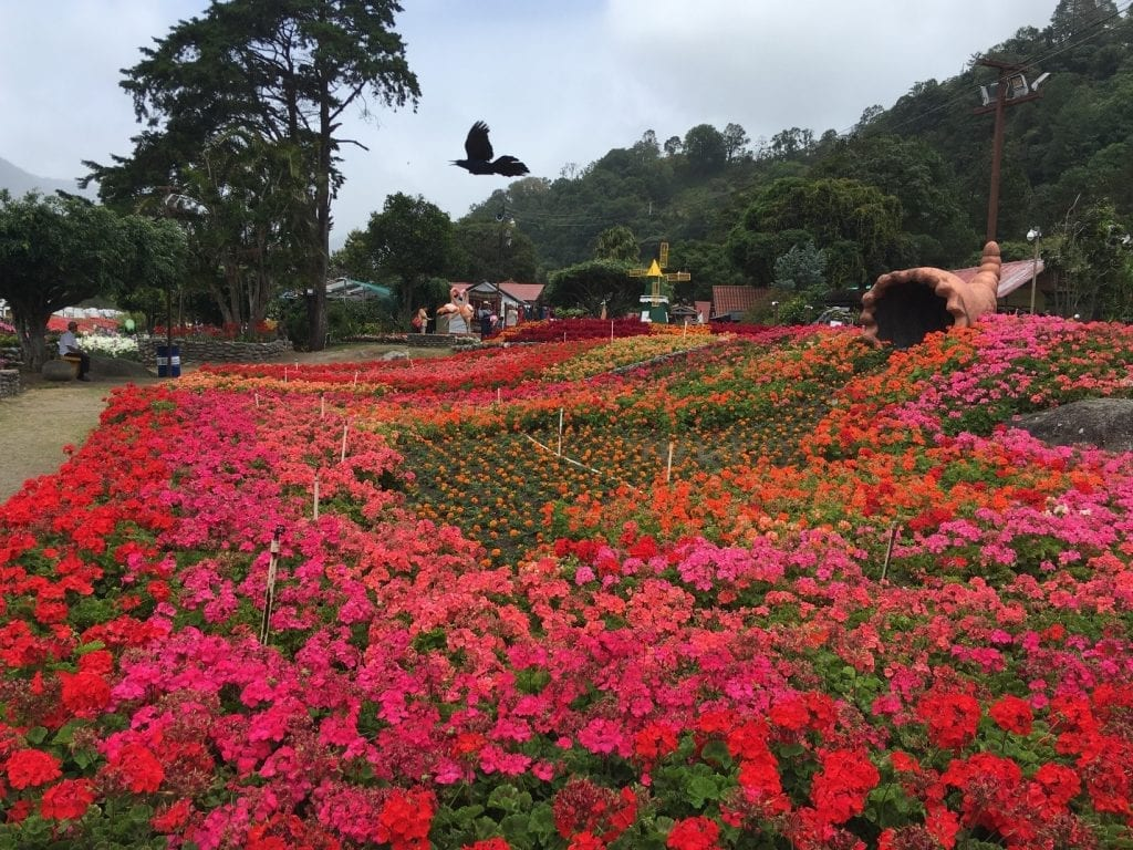 Red, orange, and pink flowers in bloom in Boquete, Panama