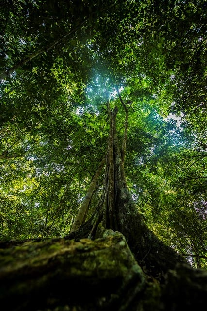A Maya Forest in Belize
