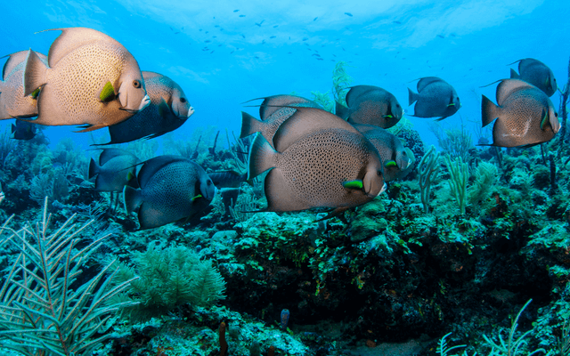 Tropical fish at belize barrier reef
