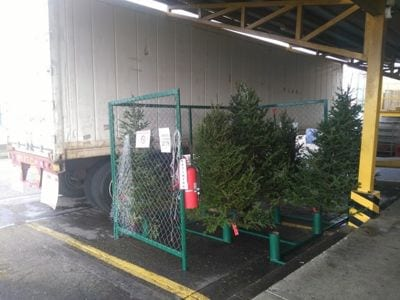 Christmass tress for sale