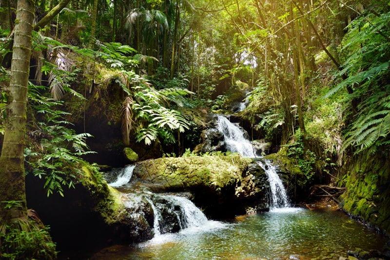 Jungle 2019 Stream