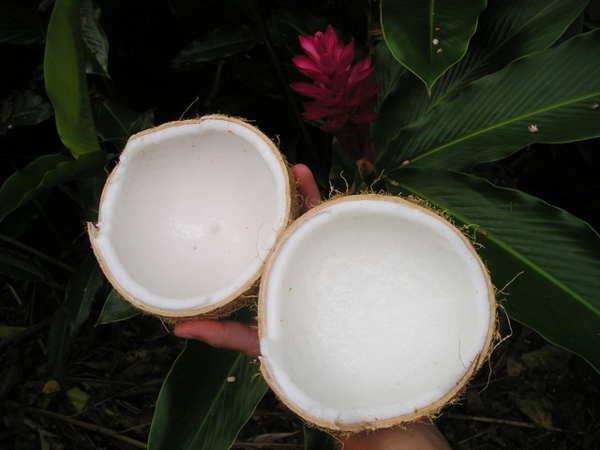 keep calm coconuts