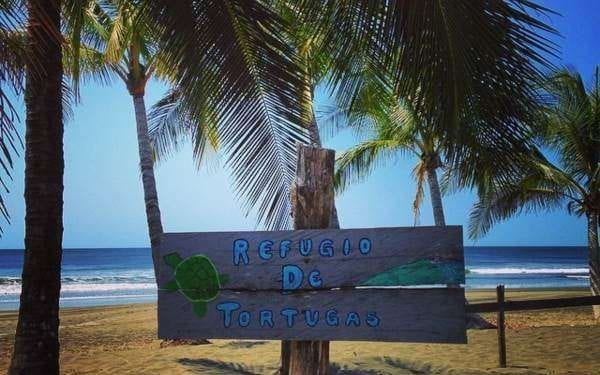 Morillo Beach turtle sign
