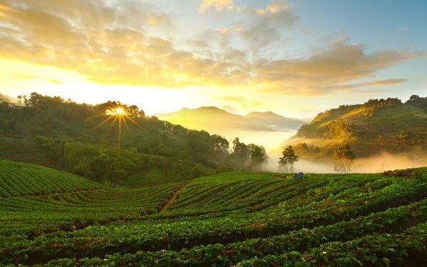 best Place To Retire In Thailand. Chiang Mai beautidul agricultural landscape