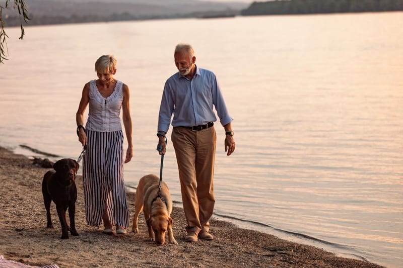 Senior couple with dogs at the beach.