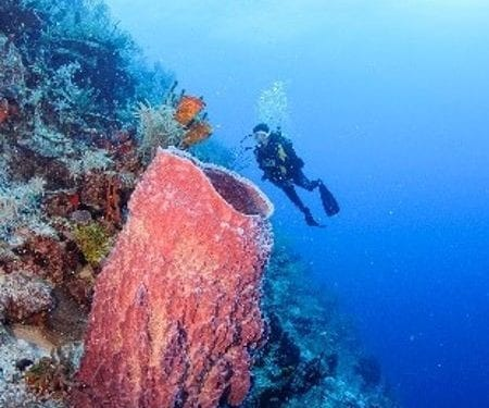 scuba diver under water in belize