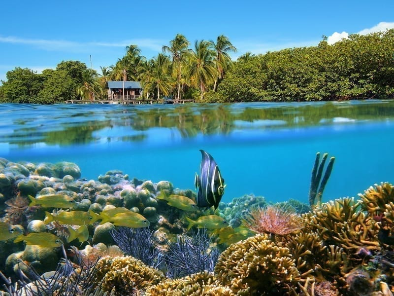 Surface and underwater view with coral reef fish, a bungalow and lush tropical vegetation, Bocas del Toro, Panama.