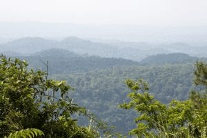 belize jungle landscape