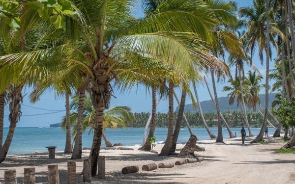 palm trees by the beach in las terrenas dominican republic