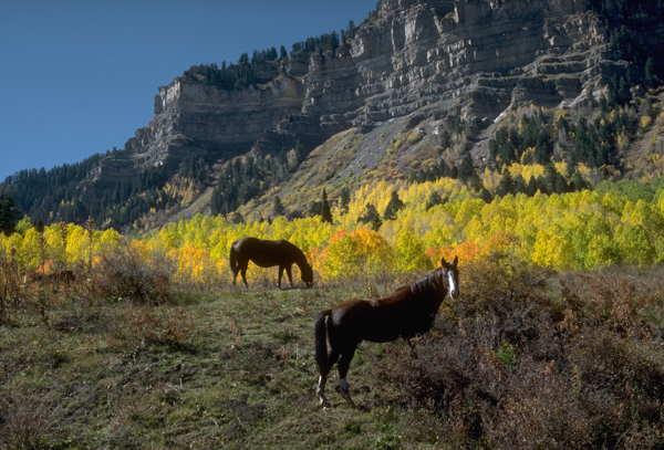 durango countryside horses