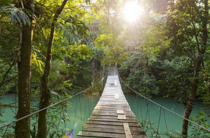brige through the jungle in belize
