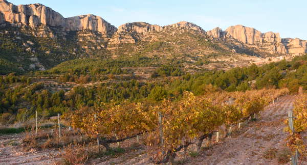 vineyard in Catalonia Spain