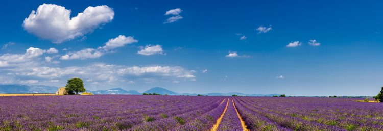 Summer in Valensole with lavender fields, stone house and heart-shaped cloud.