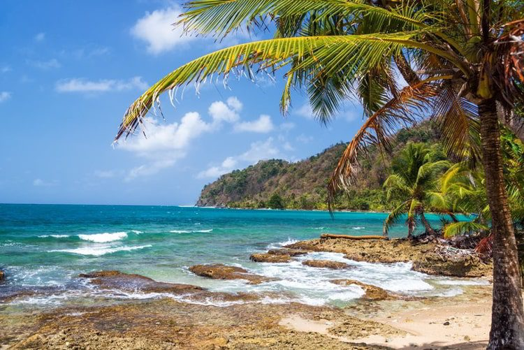 Green palm tree on the coast of La Miel, Panama