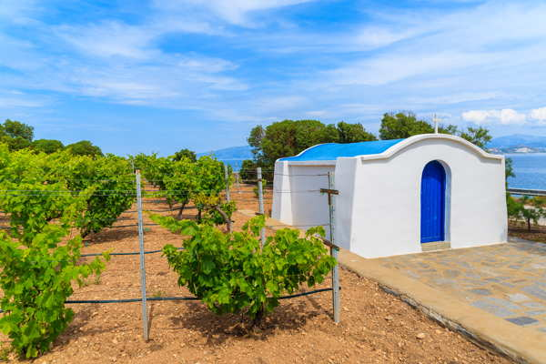 santorini greece vineyard