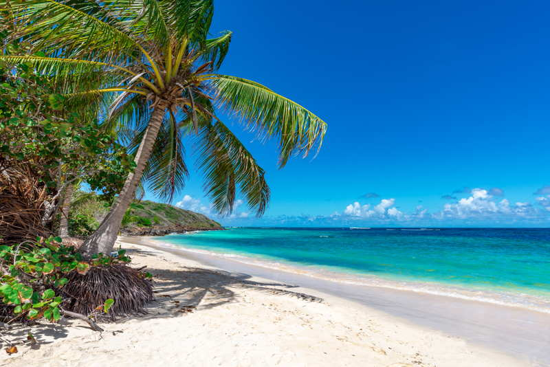 tropical beach with palm trees on a sunny day
