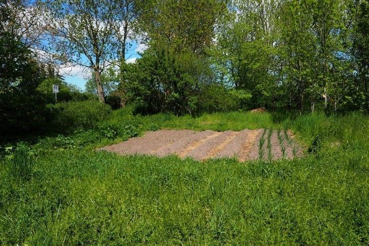 homesteading location