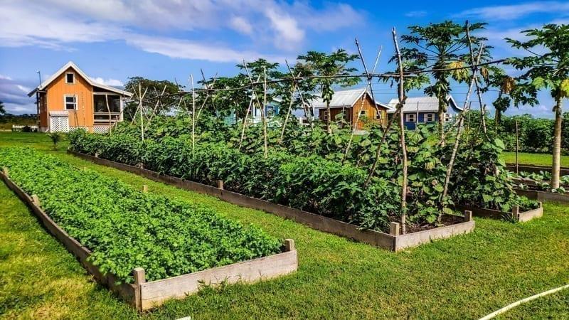 Carmelita Gardens, a self-sufficient community in Belize
