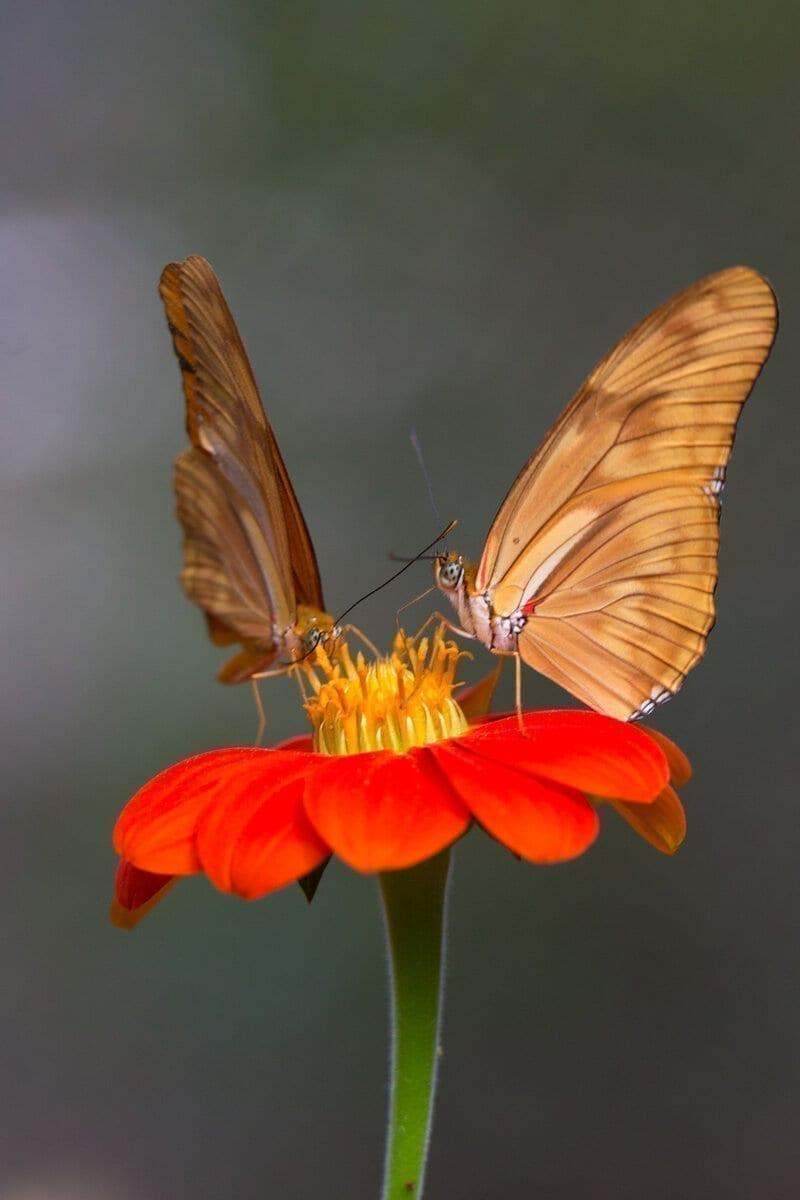 Butterflies, Botanical Garden, Colombia