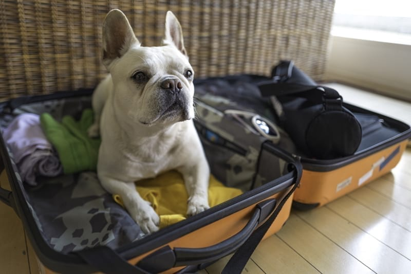 Dog sitting in packed clothes in suitcase.