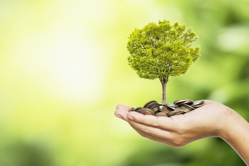 Hand holding coins and tree look like as planting. Good investment concept