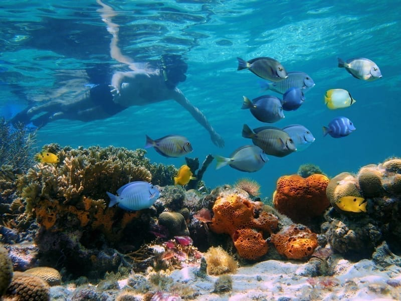 Man underwater snorkeling on a colorful coral reef with school of tropical fish.