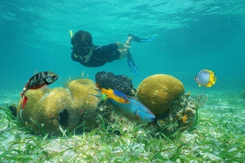 Man snorkeling underwater looking coral with tropical fish.