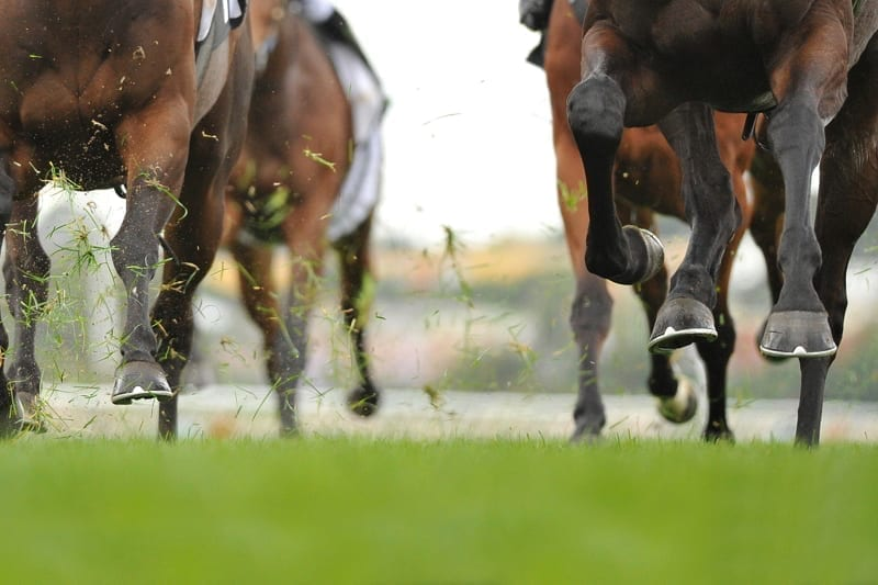 Horse racing action, hooves, legs and grass flying