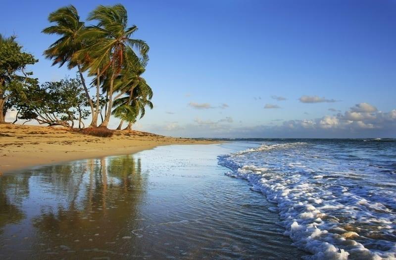 Las Terrenas beach with palm trees