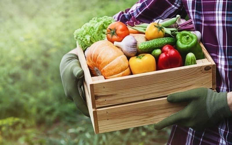 Fresh and organic food.