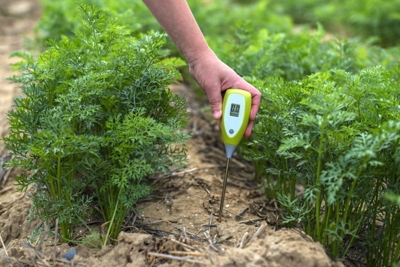 Measure soil with digital device.