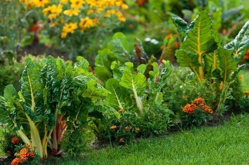 A closeup of a healthy lawn garden