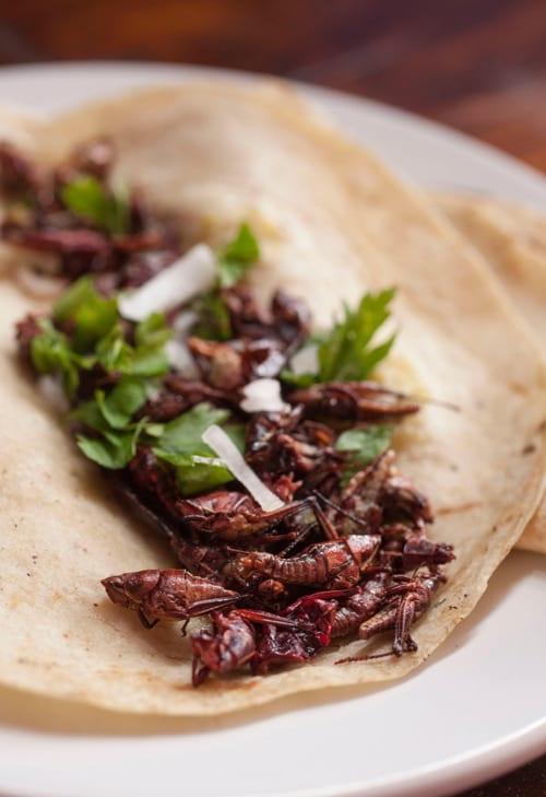 Chapulines or Grasshopper Taco