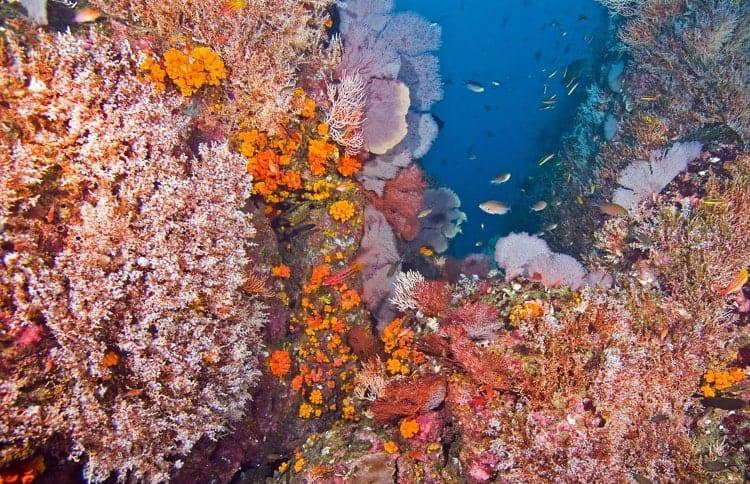 Corals in Coiba, Panama