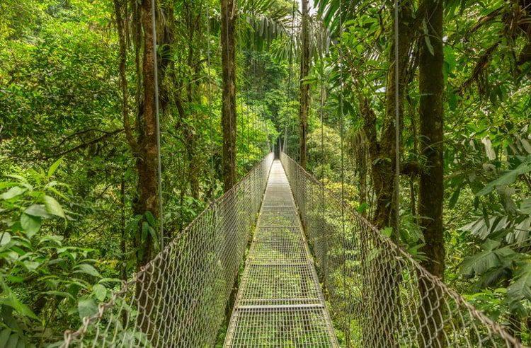 Suspended bridge at natural rainforest park, Costa Rica