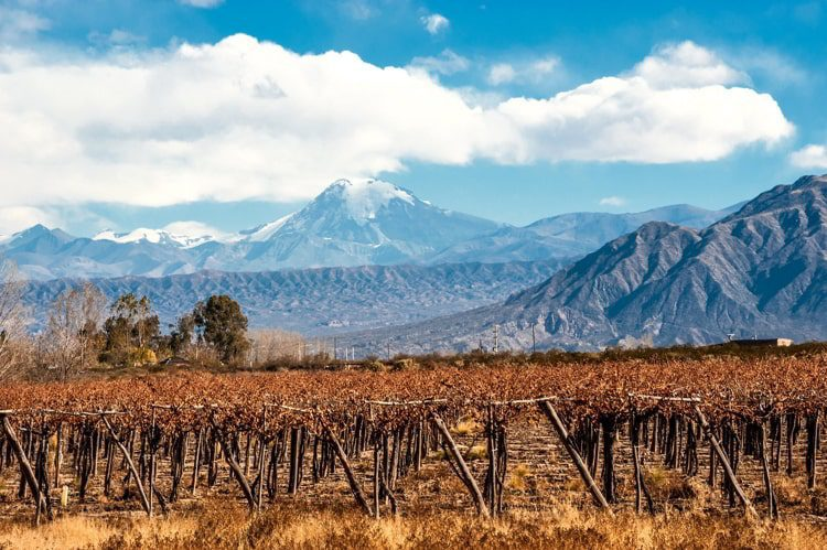 Volcano Aconcagua and Vineyard in the Andes mountain range, in the Argentine province of Mendoza