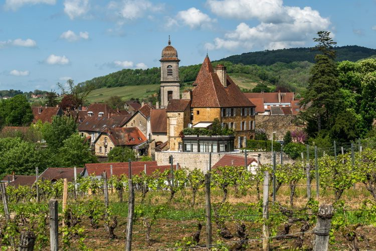 Beautiful vineyards in the town of Arbois in France