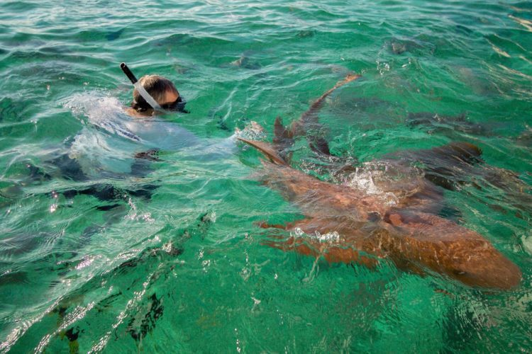 A man swimming with sharks in Belize