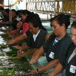 People of Belize   Banana Sorting