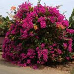 residencial-flowers